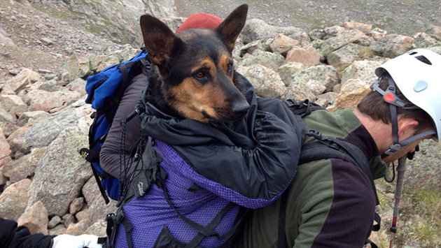 news_ht_missy_dog_rescue_tk_120816_wmain_8.12