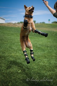 Nakio the Bionic Dog Photo by Lindsey Mladinich-1