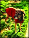 Otis in Rust Boulder Coat for Teva Games 2012