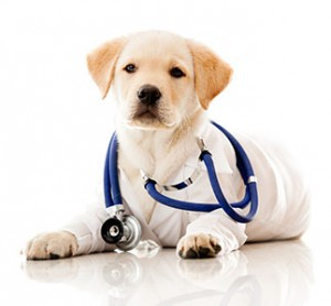 bigstock-Little-dog-as-a-vet-wearing-ro-37083442-300
