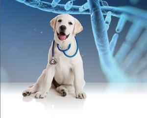CanineDNA
