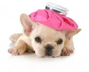 Monthly Pet Health Checklist