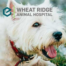 wheat-ridge-animal-hospital-featured