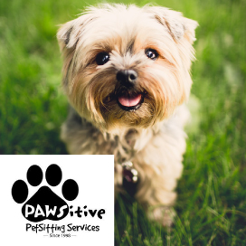 denver-dog-featured-business_pawsitive